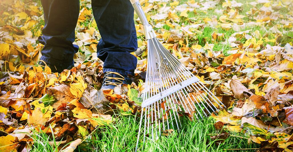 A leaf raking professional in Burnsville, MN