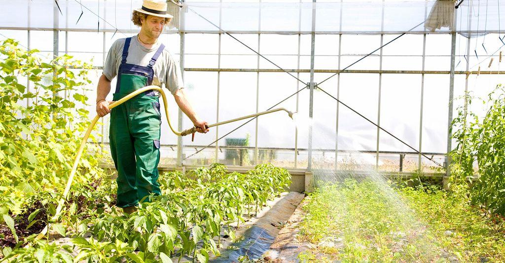A greenhouse builder in Austin, TX