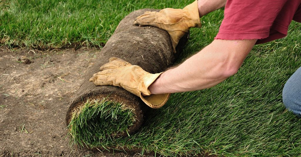 A sod layer in Dallas, TX