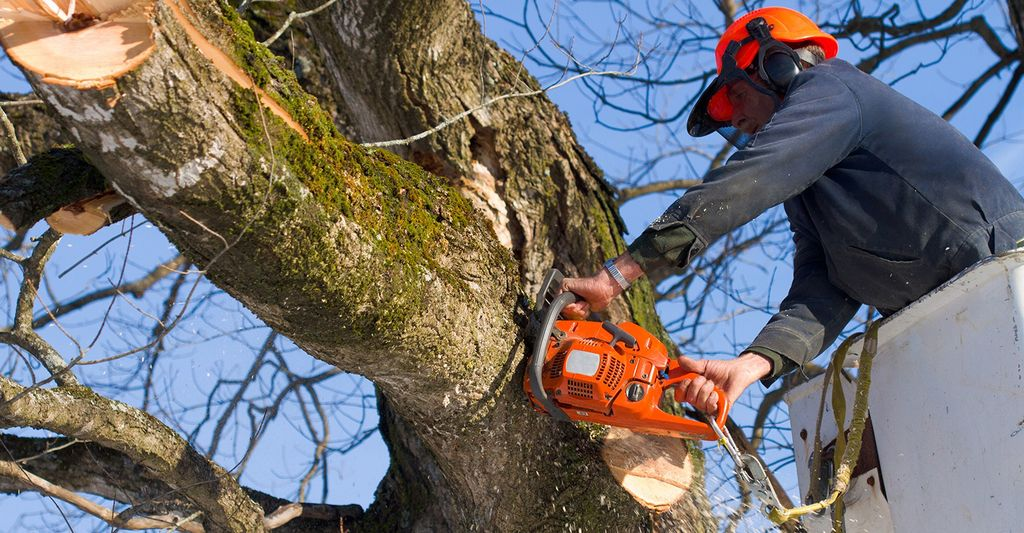 A tree pruner in Fort Worth, TX
