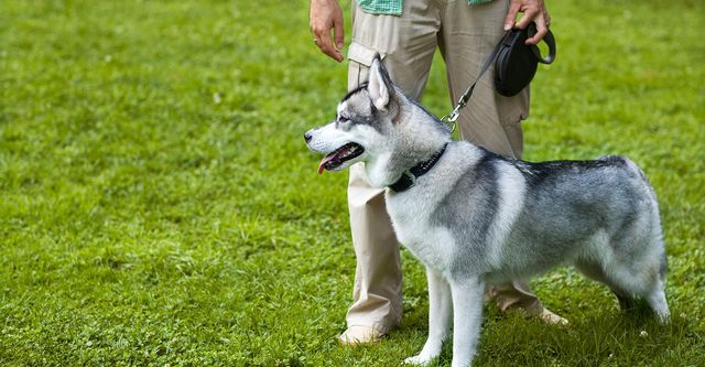 The 10 Best Dog Trainers in Dallas, TX (with Free Estimates)