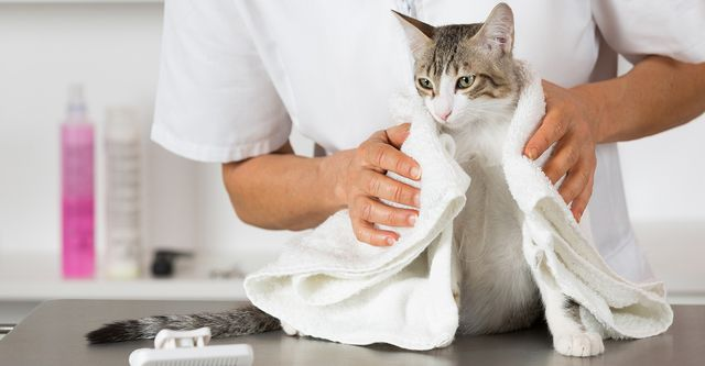 The 10 Best Cat Groomers in Kansas City, MO (with Free