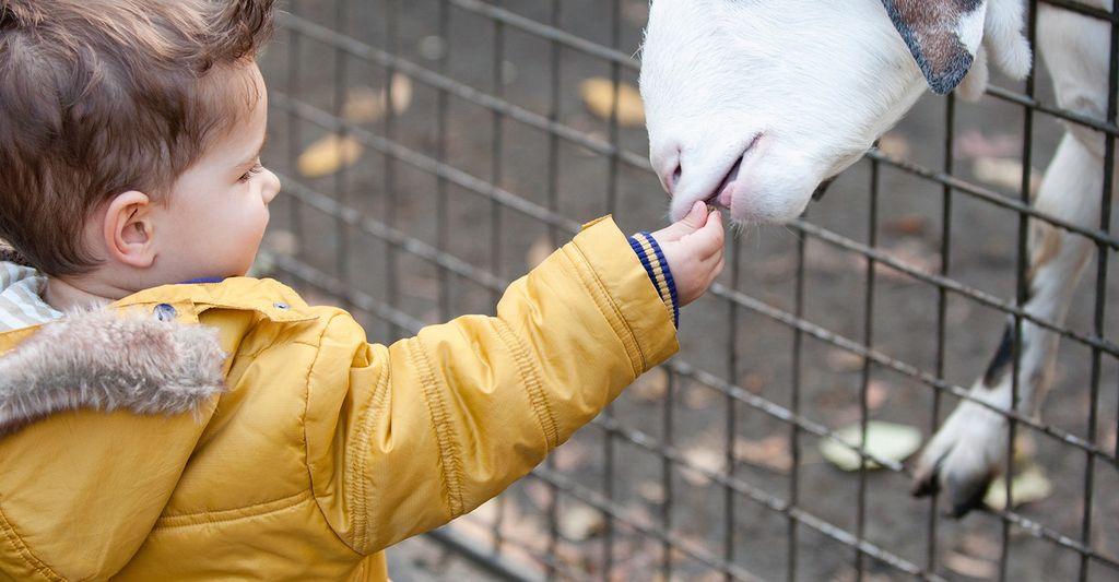 A petting zoo rental in San Jose, CA