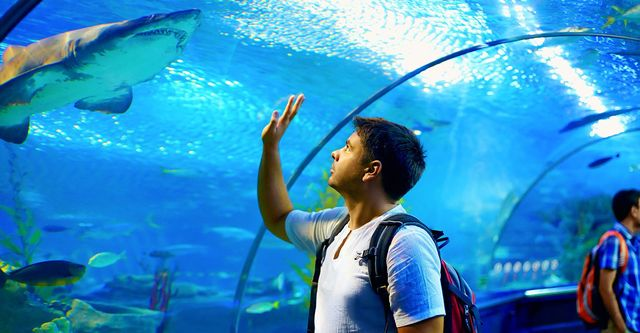 The Best Saltwater Aquarium Services Near Me (with Free