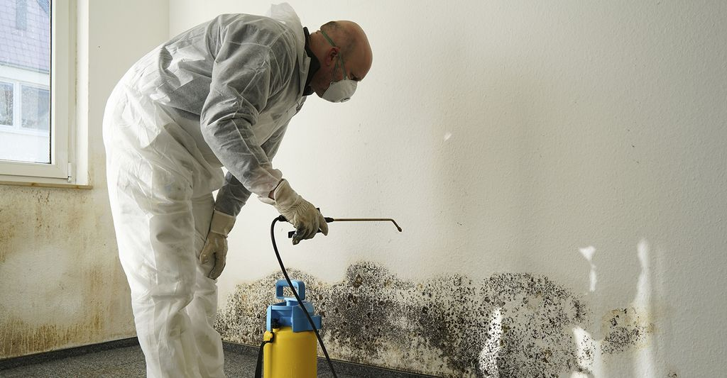 A mold remediation professional in South Elgin, IL