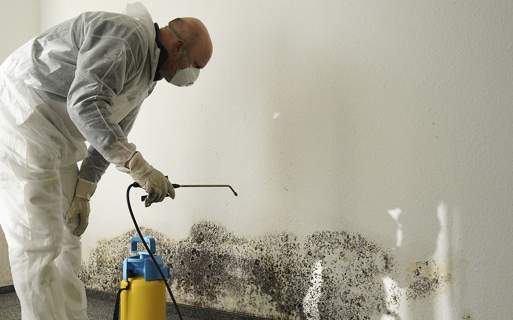 Average Mold Inspection and Removal Cost (with Price Factors)