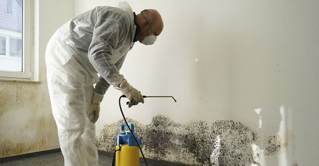 The 5 Best Basement Mold Removal Companies Near Me