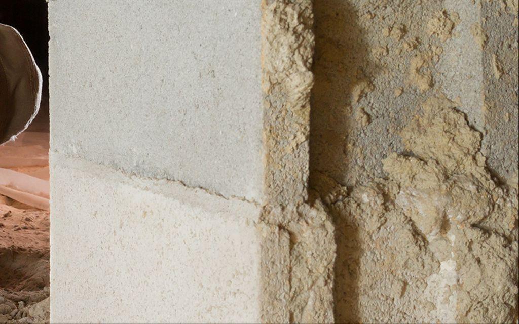 Termites cost