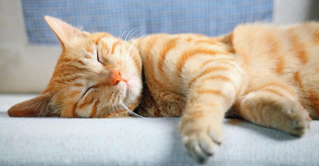 The 10 Best Cat Boarding Services in Boston, MA (with Free