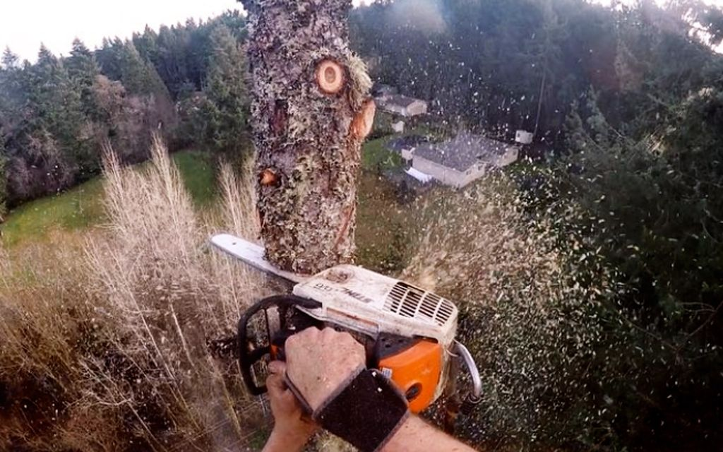 Average Tree Trimming And Removal Cost With Price Factors