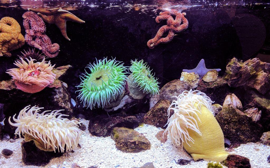 Average Saltwater Aquarium Setup Cost (with Price Factors)