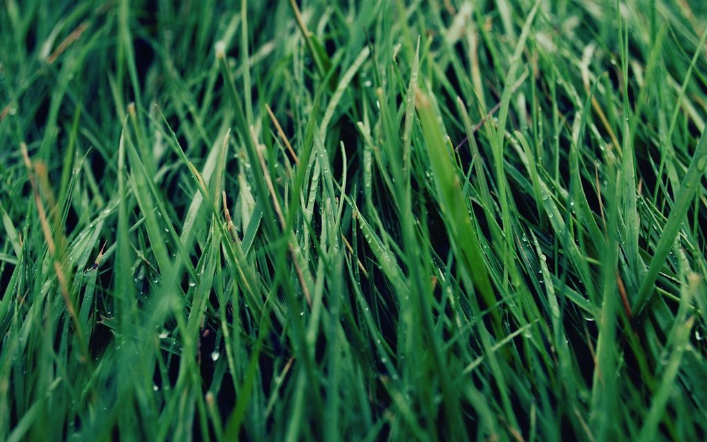 2019 Lawn Mowing Prices - Hourly, Weekly and Monthly Rates (avg)
