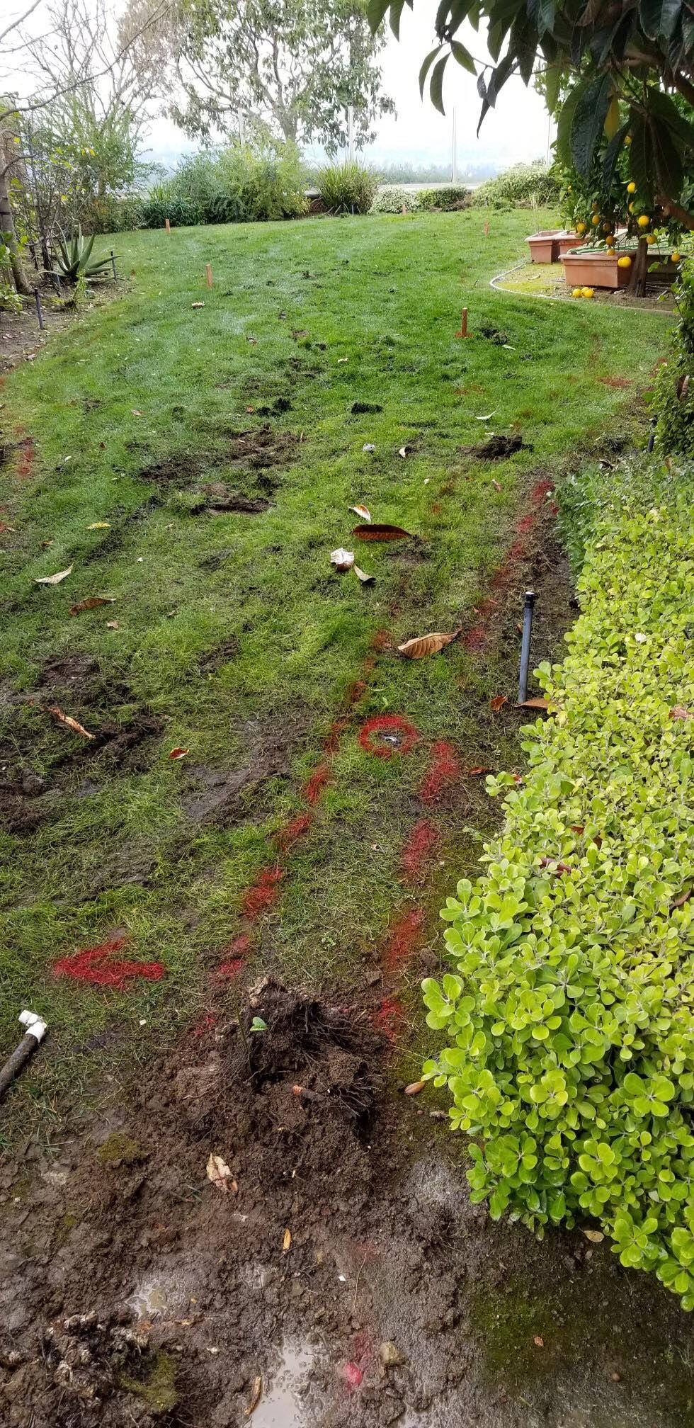 Backyard Putting Green