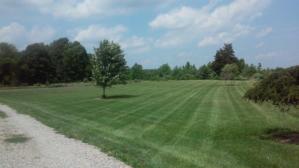 Large yard Lawn Care