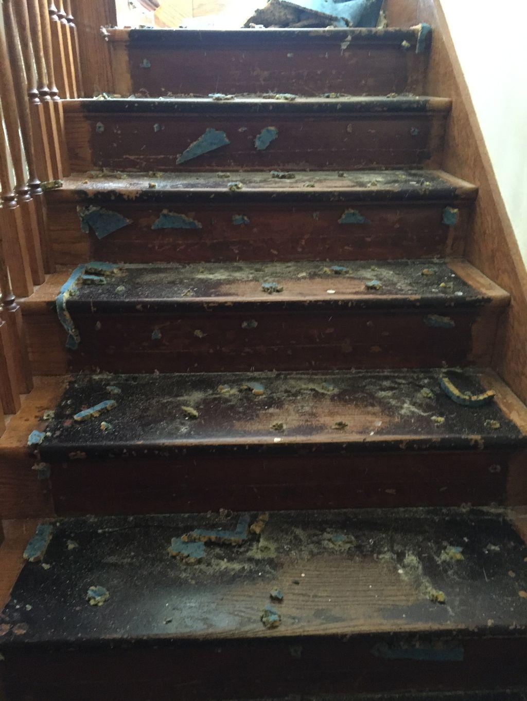 Stairs refinish
