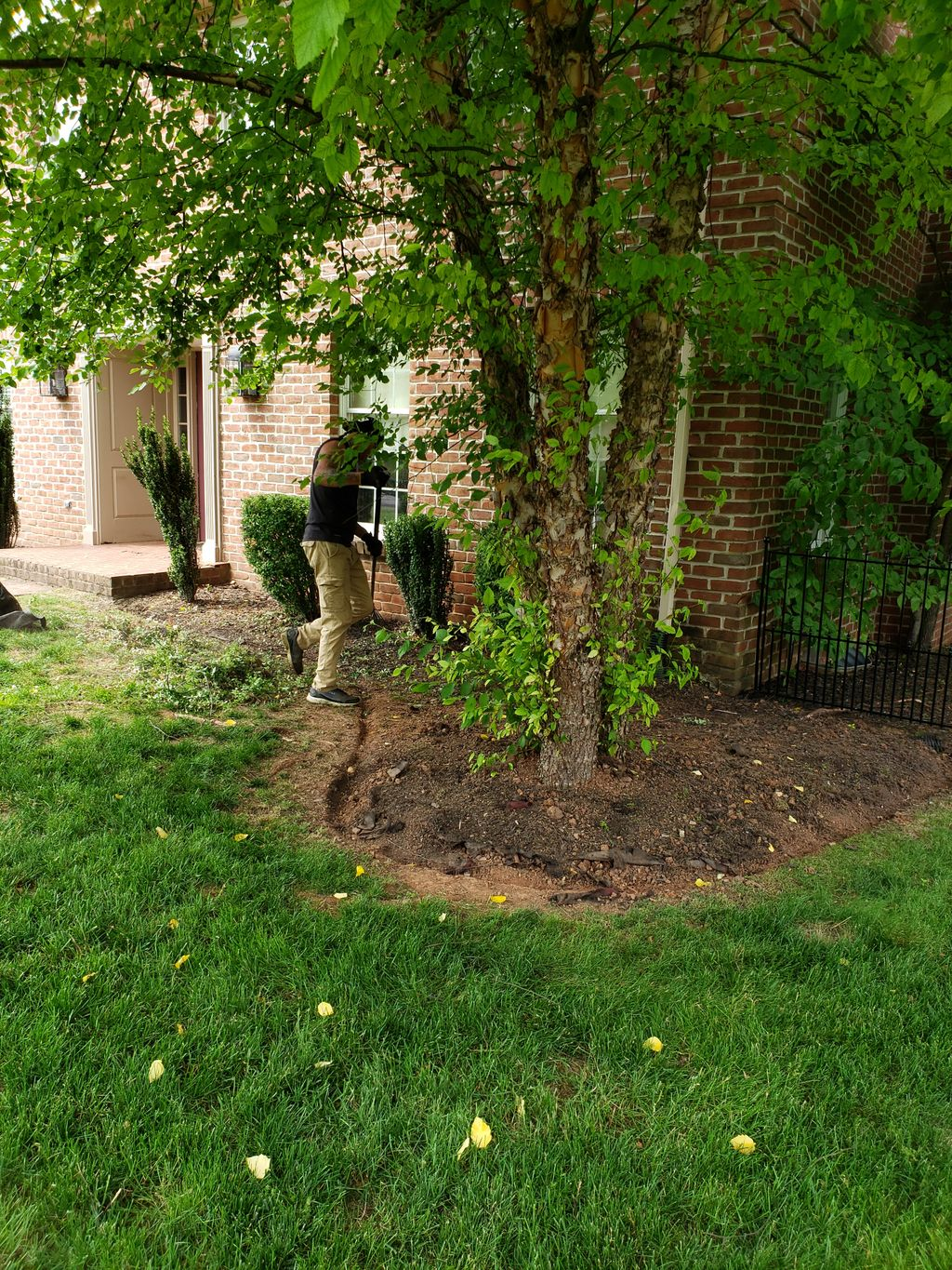 Planting and mulch