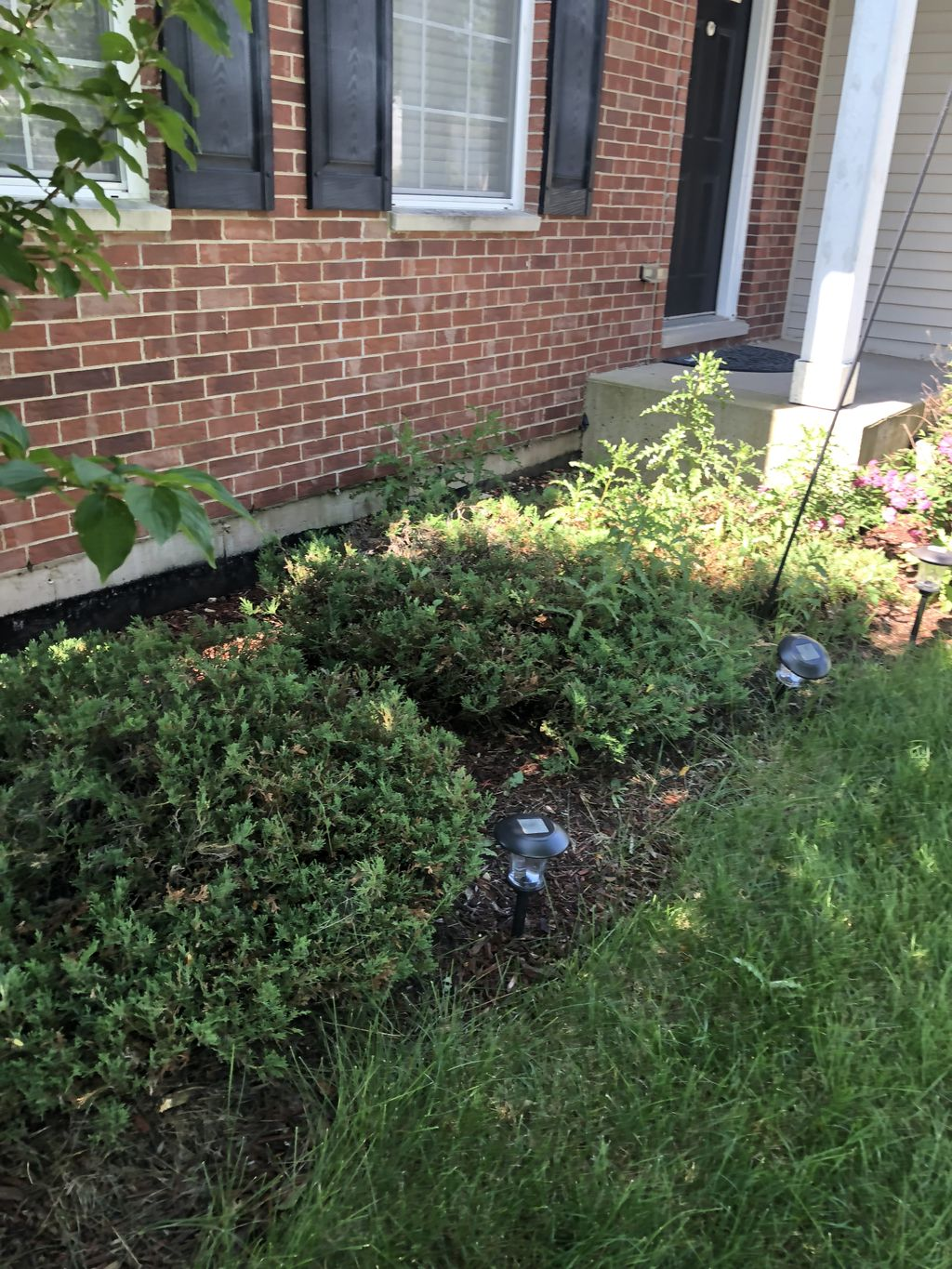 Shrubs tear out and Plant Install with brown mulch